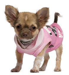 Cachorro de chihuahua con sudadera.